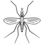 Mosquito rewarriner